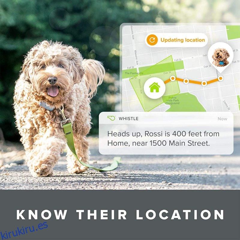 Whistle Go Explore: el mejor rastreador de salud y ubicación para mascotas