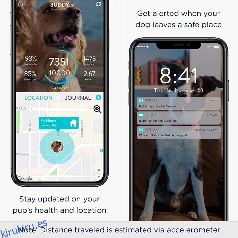 Rastreador GPS para perros FitBark | Salud y ubicación Seguimiento de mascotas Collar inteligente